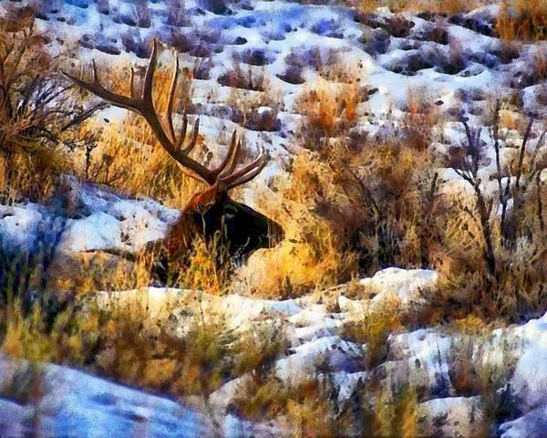 Digital Art - Camouflage Buck by Mario Carini