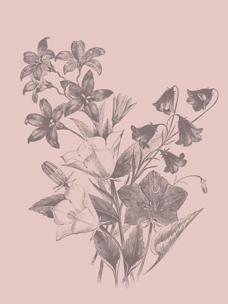 Love Mixed Media - Campanulas Blush Pink Flower by Naxart Studio