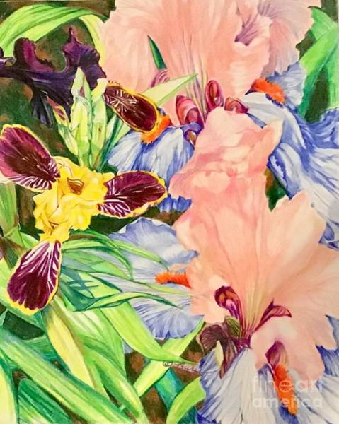 Drawing - Can-can And Bumblebee Iris by Laurel Adams
