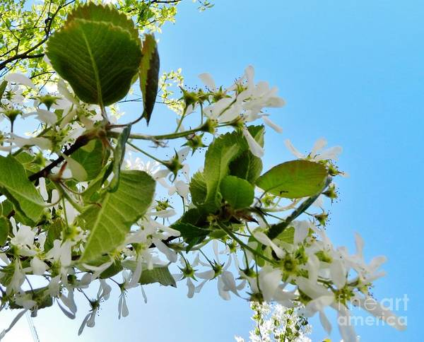 Wall Art - Photograph - Cana Island In Bloom by Snapshot Studio
