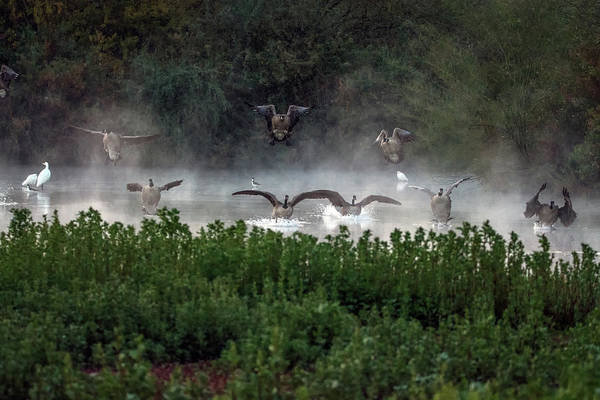 Photograph - Canada Geese And Egrets In The Mist 3890-120918-1cr by Tam Ryan