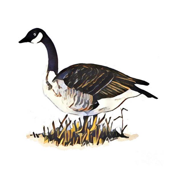 Mixed Media - Canada Goose by Art MacKay