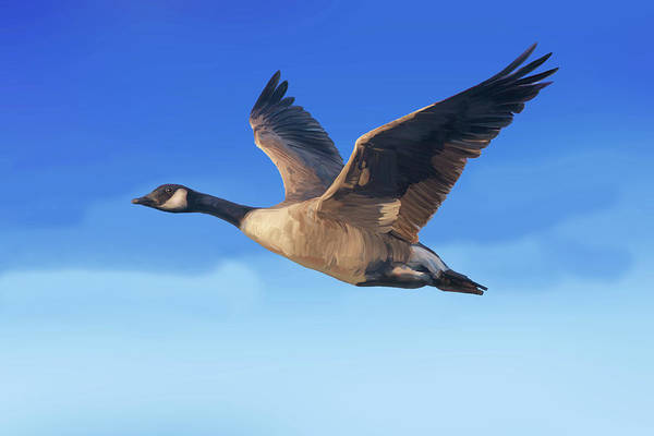 Digital Art - Canada Goose Flying With Blue Sky Above by Mark Miller