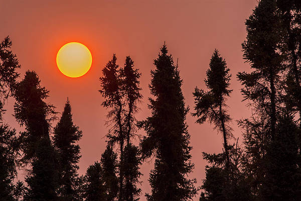 Spruce Photograph - Canada, Manitoba, Thompson by Jaynes Gallery