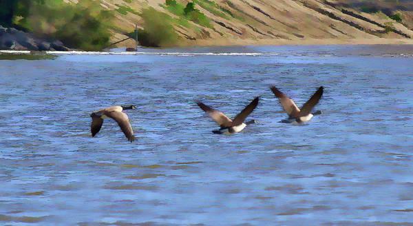 Wildlife Refuge Digital Art - Canadian Geese Abstract IIi by Linda Brody