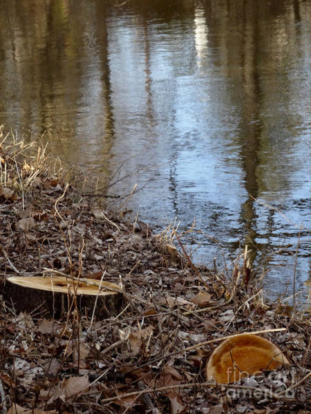 Photograph - Canal Stumps-003 by Christopher Plummer