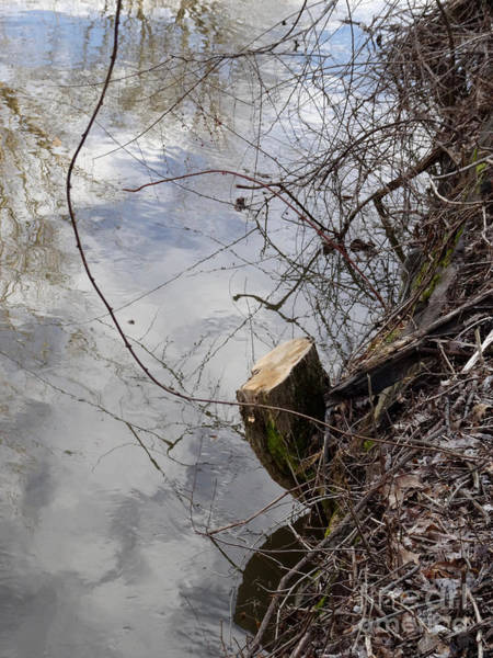 Photograph - Canal Stumps-005 by Christopher Plummer