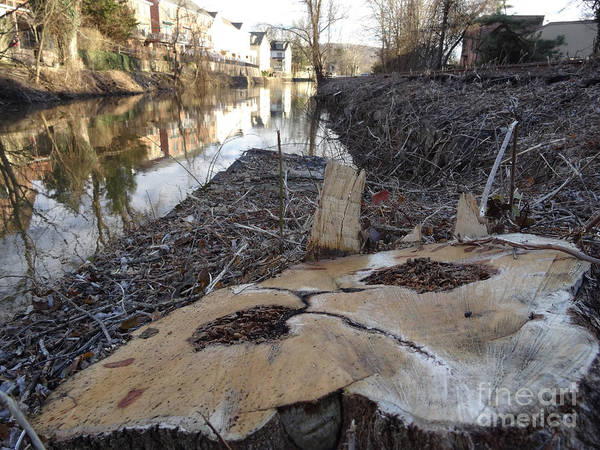 Photograph - Canal Stumps-023 by Christopher Plummer