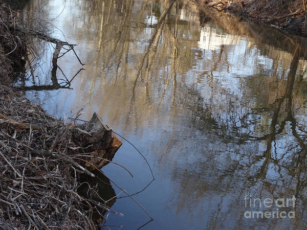 Photograph - Canal Stumps-028 by Christopher Plummer