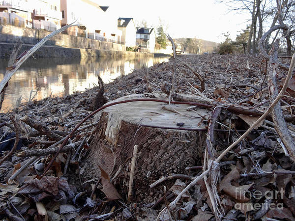 Photograph - Canal Stumps-030 by Christopher Plummer
