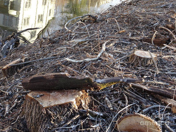 Photograph - Canal Stumps-037 by Christopher Plummer
