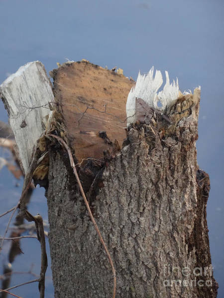 Photograph - Canal Stumps-051 by Christopher Plummer