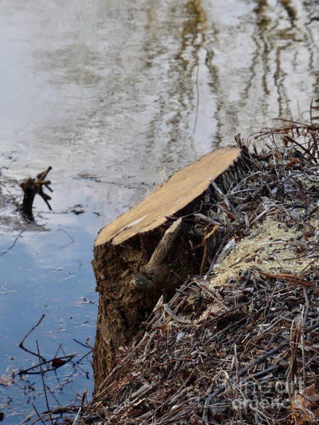 Photograph - Canal Stumps-052 by Christopher Plummer
