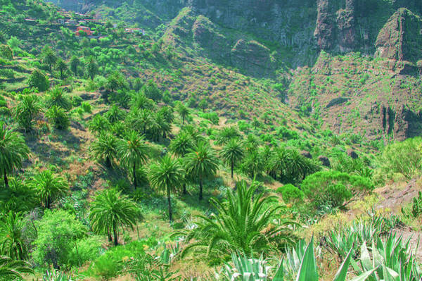 Photograph - Canary Date Palms In Masca by Sun Travels