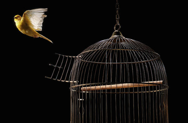Birdcage Photograph - Canary Flying Out Of Cage by Pm Images