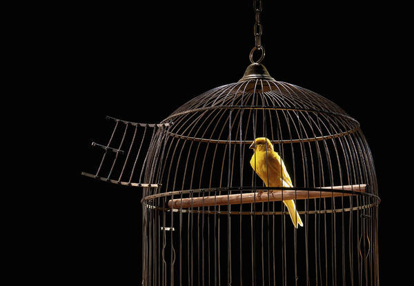 Birdcage Photograph - Canary In Cage With Open Door by Pm Images