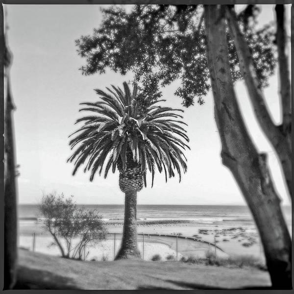 Wall Art - Photograph - Canary Island Palm Tree by Craig Brewer