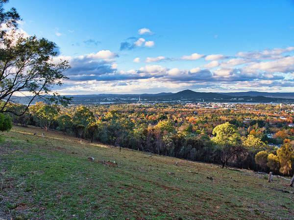 Skippy Wall Art - Photograph - Canberra Autumn 1 - Australia by Steven Ralser