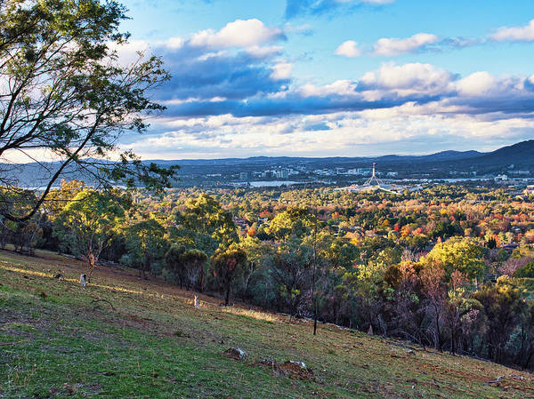 Skippy Wall Art - Photograph - Canberra Autumn 2 - Australia by Steven Ralser