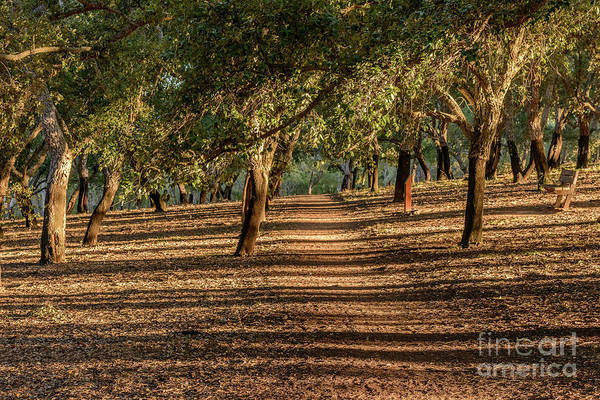 Photograph - Canberra Cork Plantation 07 by Werner Padarin