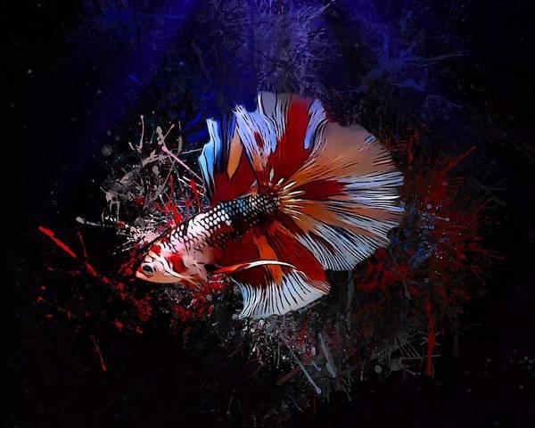 Digital Art - Candy Kio Betta Portrait by Scott Wallace Digital Designs