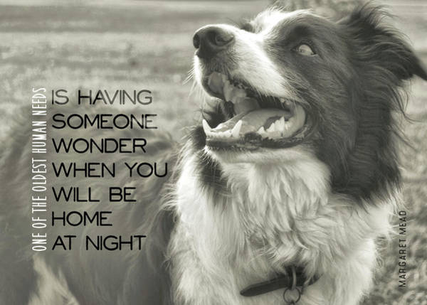 Photograph - Canine Grin Quote by JAMART Photography