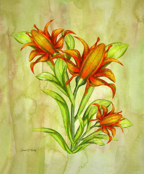 Wall Art - Painting - Canna Flowers Watercolor by Sandi OReilly