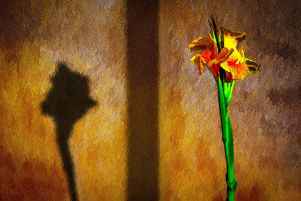 Photograph - Canna Lily Sunset by Paul Wear