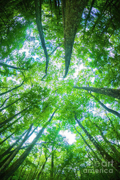 Photograph - Canopy Coverd by Spade Photo