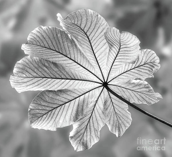 Wall Art - Photograph - Canopy by John Edwards