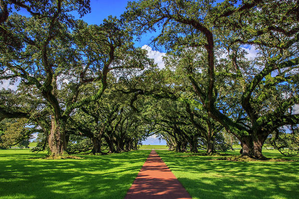Wall Art - Photograph - Canopy Of Southern Live Oak Trees, Oak Alley Plantation by Bridget Calip