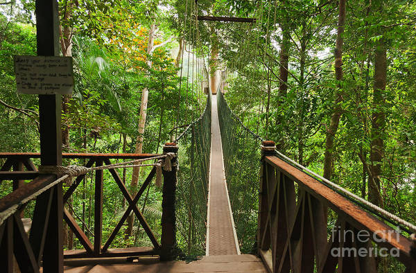 Rain Forest Wall Art - Photograph - Canopy Walkway. Taman Negara National by Elena Odareeva
