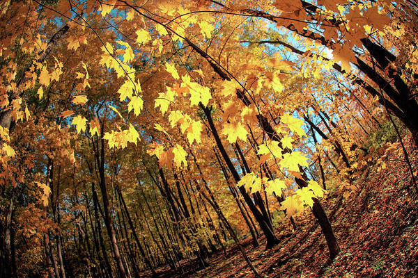 Wall Art - Photograph - Canted Autumn by Todd Klassy