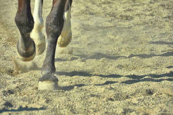 Photograph - Cantering Along by JAMART Photography