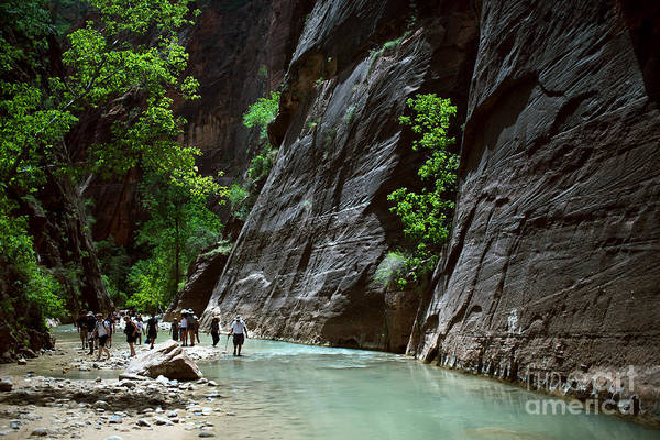 Wall Art - Photograph - Canyoning In The Narrows, Zion Canyon by Lpedan