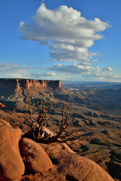 Photograph - Canyonland's Green River Overlook by Ray Mathis
