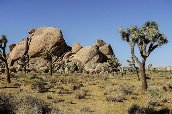 Photograph - Cap Rock Area, Joshua Tree National Park by NaturesPix