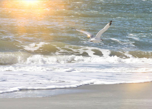 Photograph - Cape May Glide by JAMART Photography