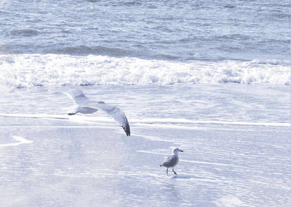 Photograph - Cape May Seagulls by JAMART Photography