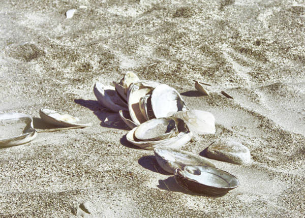 Photograph - Cape May Shells by JAMART Photography