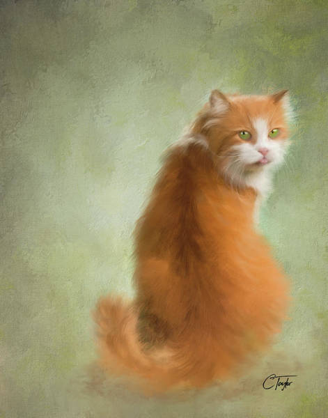 Tan Cat Wall Art - Painting - Caramel The Tabby Cat by Colleen Taylor