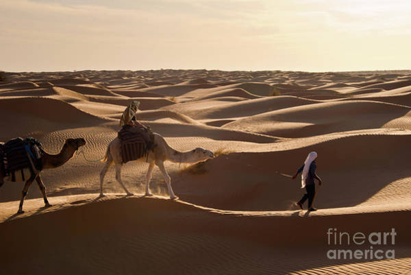 Dromedary Wall Art - Photograph - Caravan by Delphimages Photo Creations