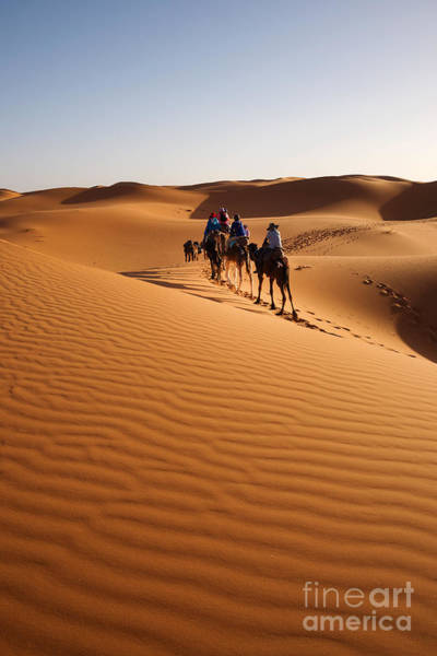 Wall Art - Photograph - Caravan Going Through The Sand Dunes In by Yongyut Kumsri