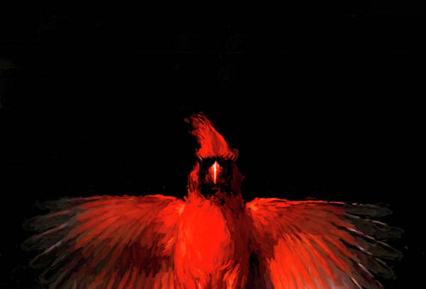 Photograph - Cardinal Drama by Pete Rems