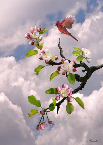 Wall Art - Digital Art - Cardinal In Apple Tree by Spadecaller