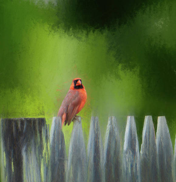 Digital Art - Cardinal On A Fence Post by Jason Fink