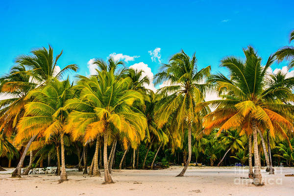 Wall Art - Photograph - Caribbean Landscape With A Clear Sky by Marco Bicci