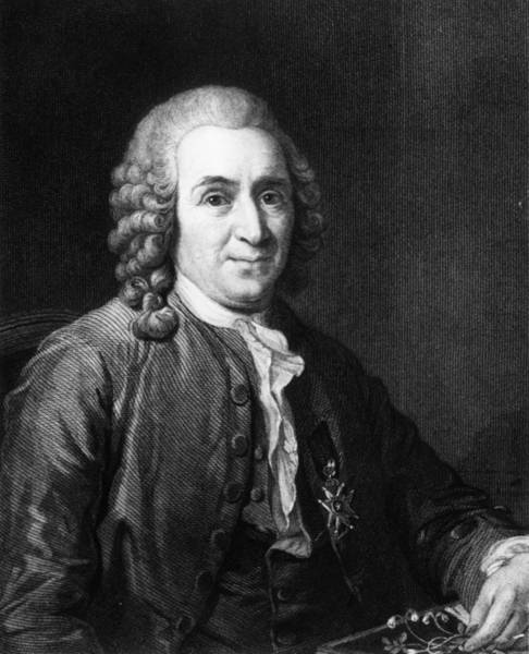 18th Century Digital Art - Carl Von Linnaeus by Hulton Archive