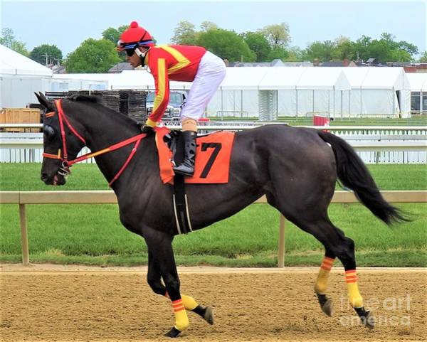 Wall Art - Photograph - Carlos Carrasco - Rein Supreme - Pimlico by Anthony Schafer