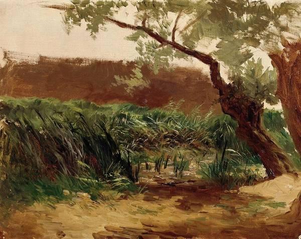 Bullrush Painting - Carlos De Haes / 'bullrush -piedra-', Ca. 1872, Spanish School, Canvas, 32,5 Cm X 42 Cm, P06871. by Carlos de Haes -1829-1898-